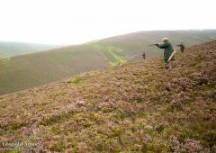 Grouse shoot 2016
